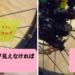 マウンテンバイクMTBのモデル~違いと見極め方~ その2.ブレーキ編 機械式と油圧式の違いなど